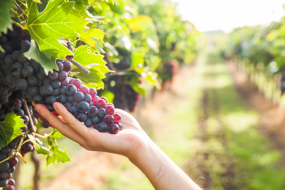 grapes blurred background shutterstock_320748644